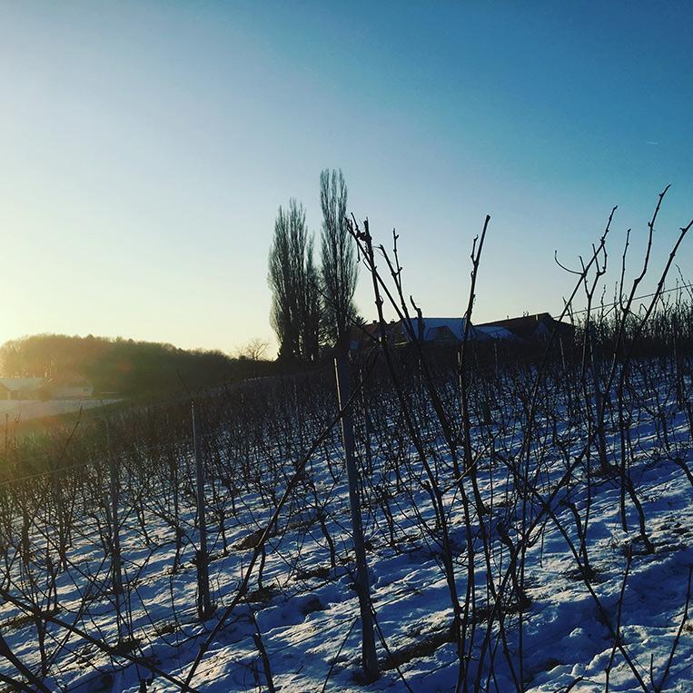 Herrenhof_pruning-time_2017