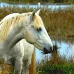 A horse - ein Pferd