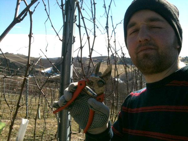 Schneiden, pruning, vineyard, weingarten