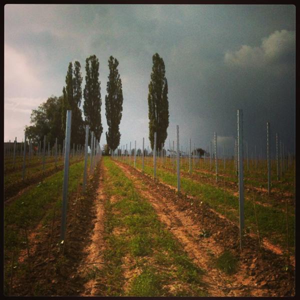Herrenhof_Front-und-neuer-Weingarten